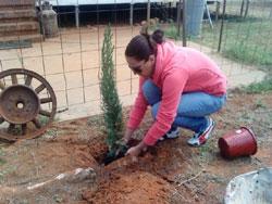 Alice-planting-tree