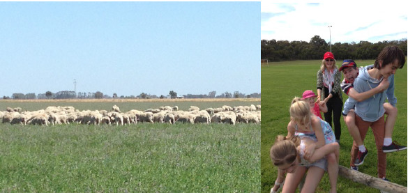 Left: sheep 'finishing off'  Right: Janie with grandchildren at Miles Hay Farm.