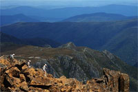 The summit of Cradle Mountain.